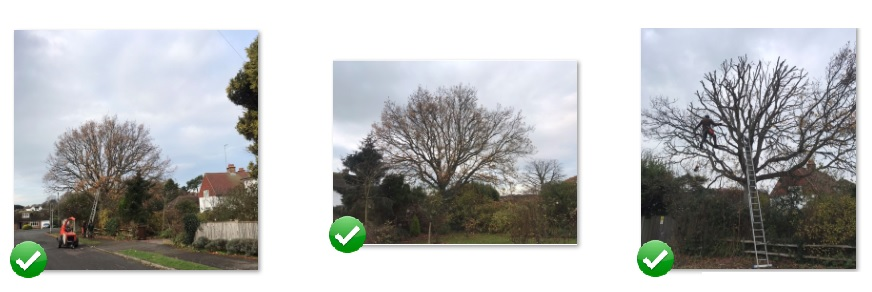 acorn tree surgery eastbourne